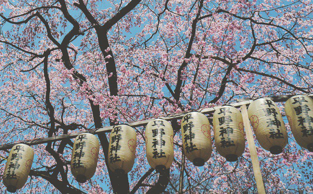 Sakura en Primavera